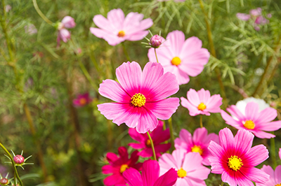autumnflower_400x267