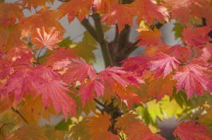 Autumn in Bright 2016 - 016