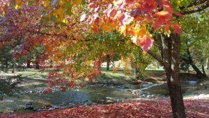 Harrietville Autumn River
